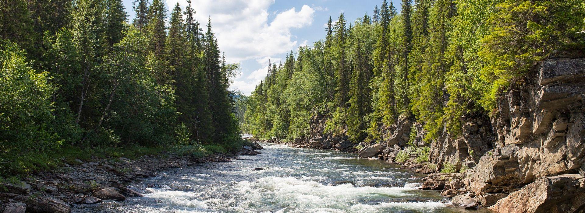Fluss durch Natur