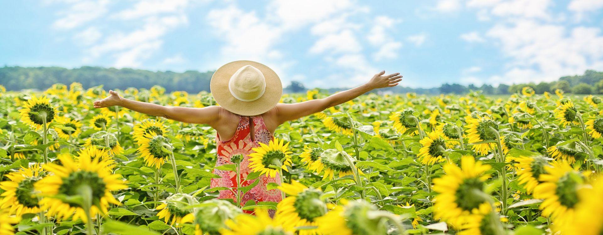 Frau in Sonnenblumen 1920x750